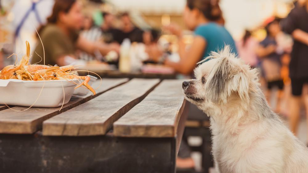 Puppy Outdoor Restaurant