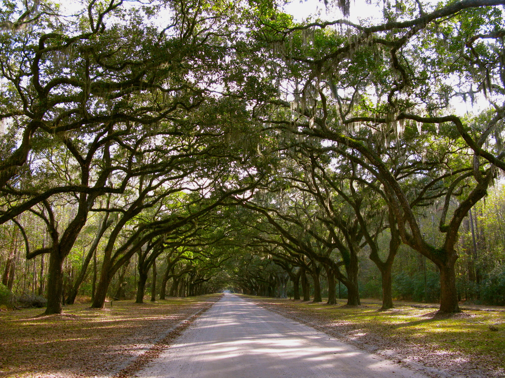 Wormsloe Plantation, Savannah Georgia