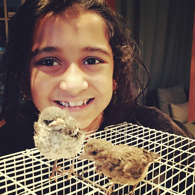 The #child who has felt a strong #love for her surroundings and for all #livingcreatures, gives us reason to hope that #humanity can develop in a #newdirection 🙏🏽 #orphan #babybird 💕 #bekind #Montessori #plano #frisco #whitedovemontessori  age 3-6 #compassion