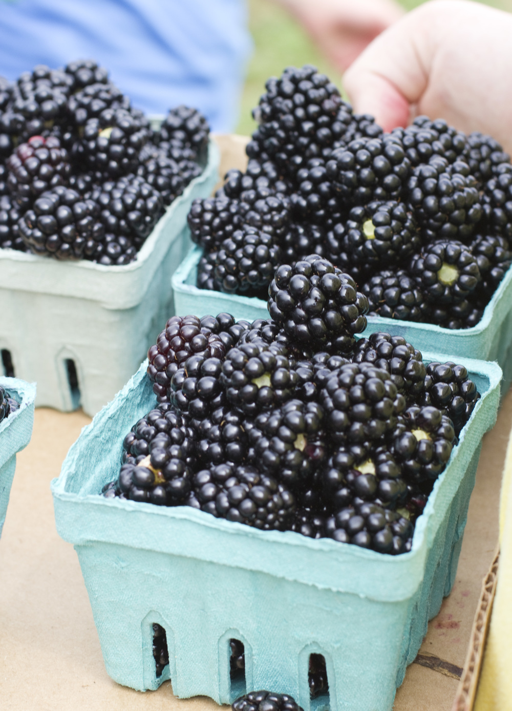 8.29.13—Blackberries_CC_1.jpg