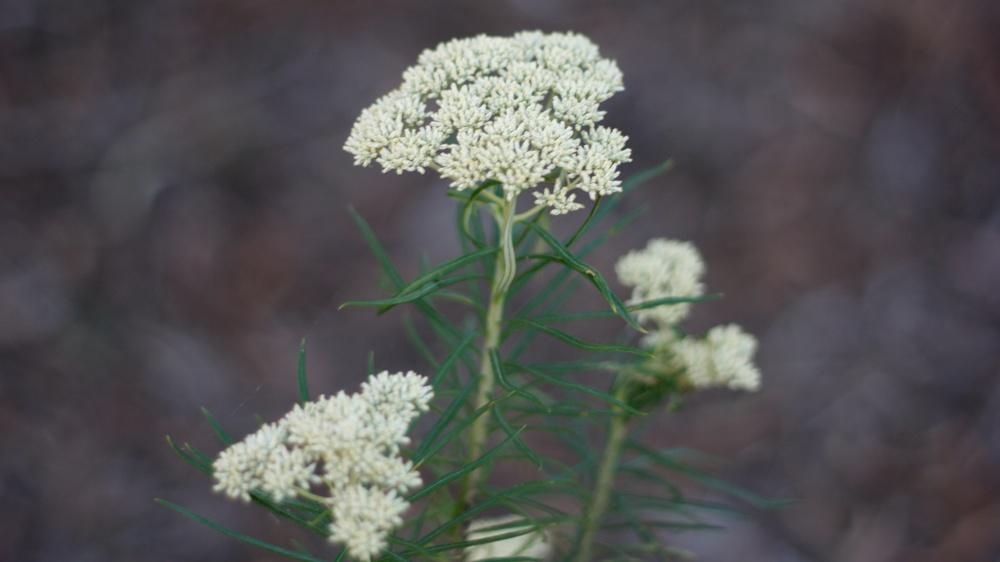bush (9).jpg