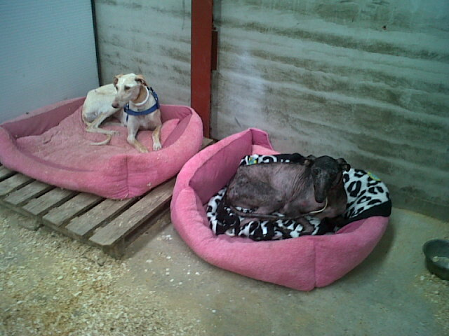 Julia & Luisa at Rescue Center on Beds