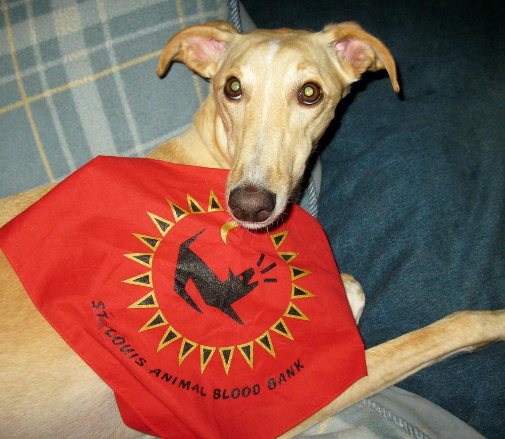 Luna Blood Donor