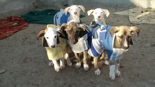 Puppies in Coats
