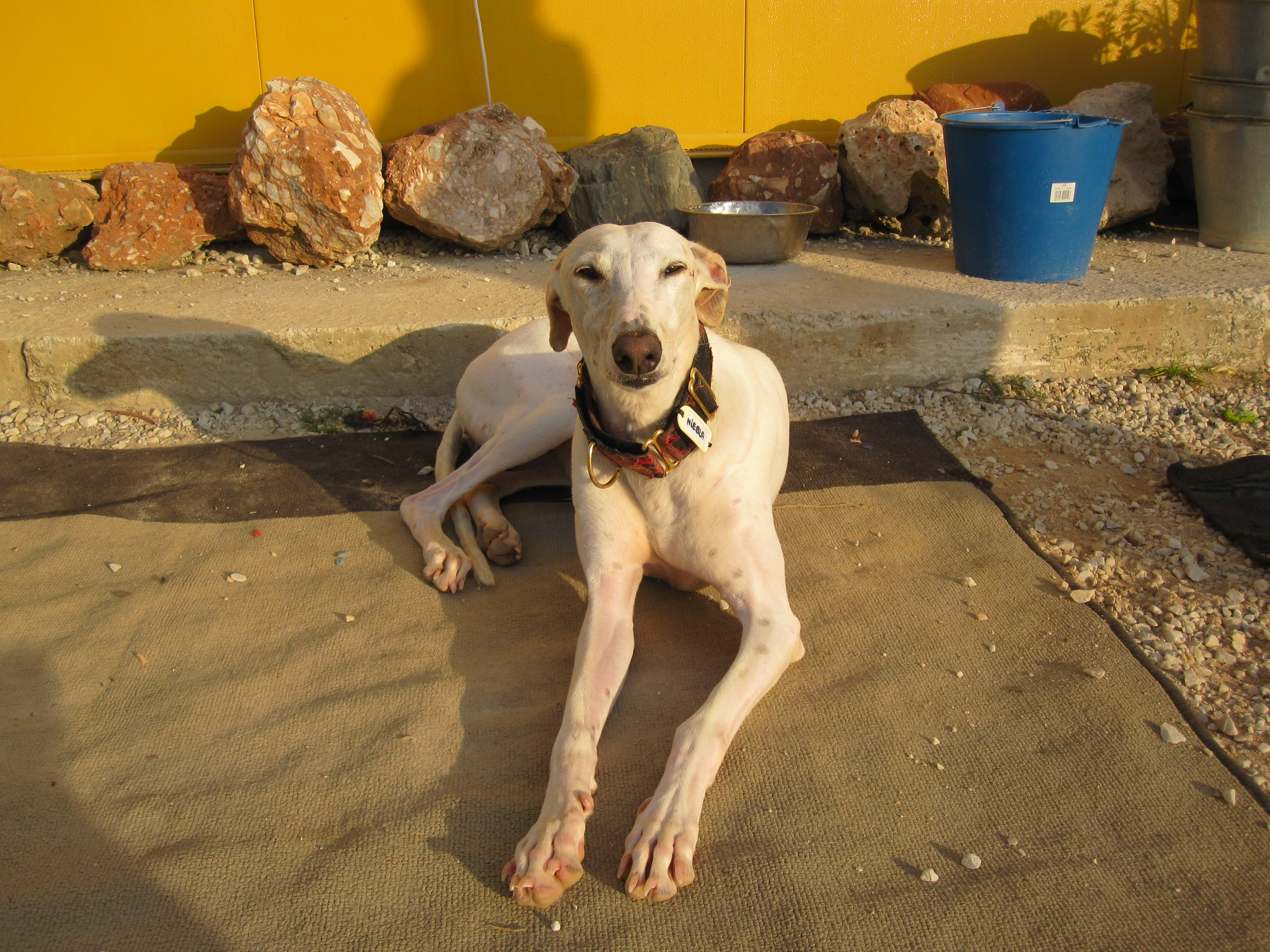 Niebla waiting for her forever home at GEF! Could that be you??