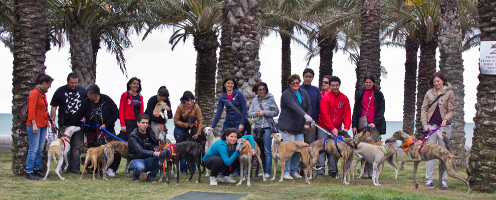 GEF Torremolinos Beach Walk with all the shelter dogs!