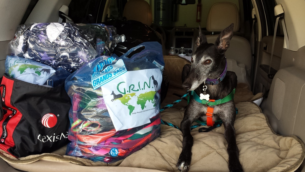 Mica keeps watch over 75 lbs of donated soft-goods headed to Spain.