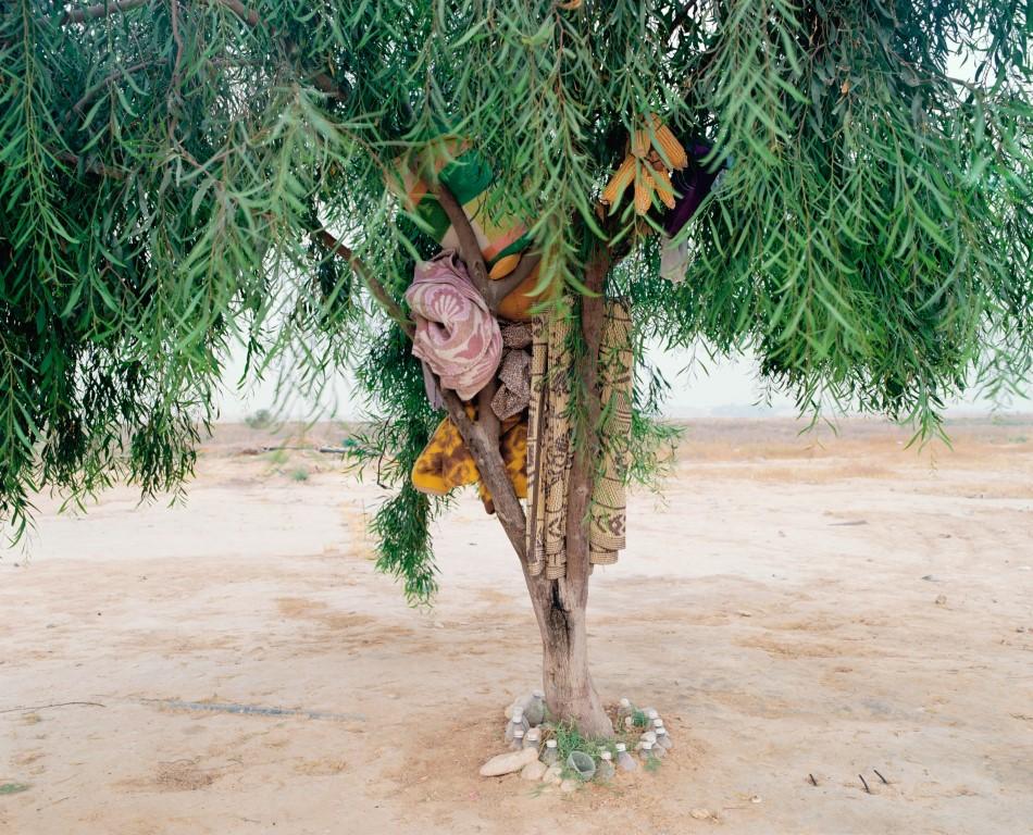 Bisharah and Anwar's Tree, 2015, Inkjet print, 82X100 cm