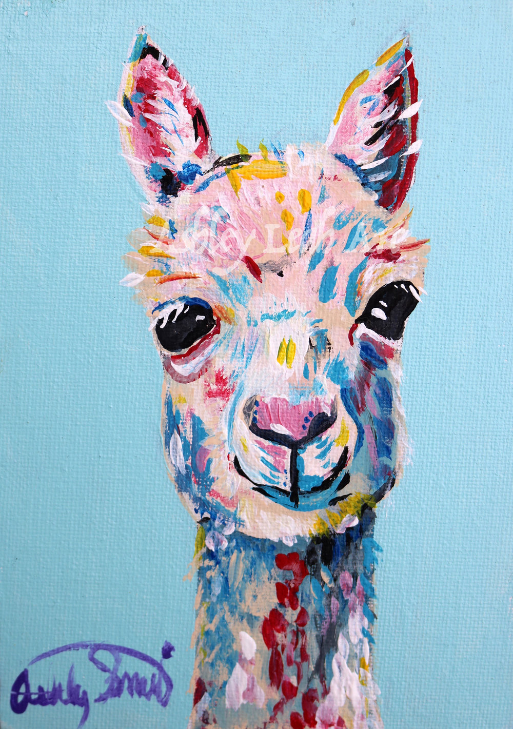 Oakland the Alpaca -