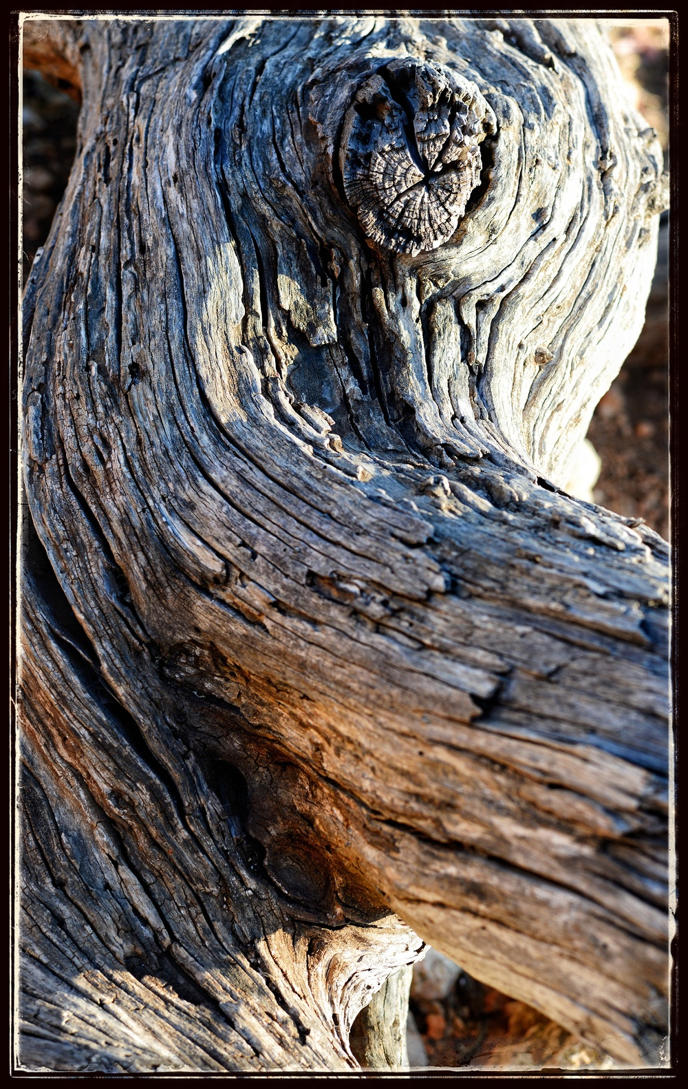 One of the dried logs.