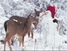 Could be Kansas deer checking out the snowman