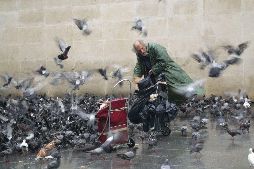 Pigeon Man, Paris