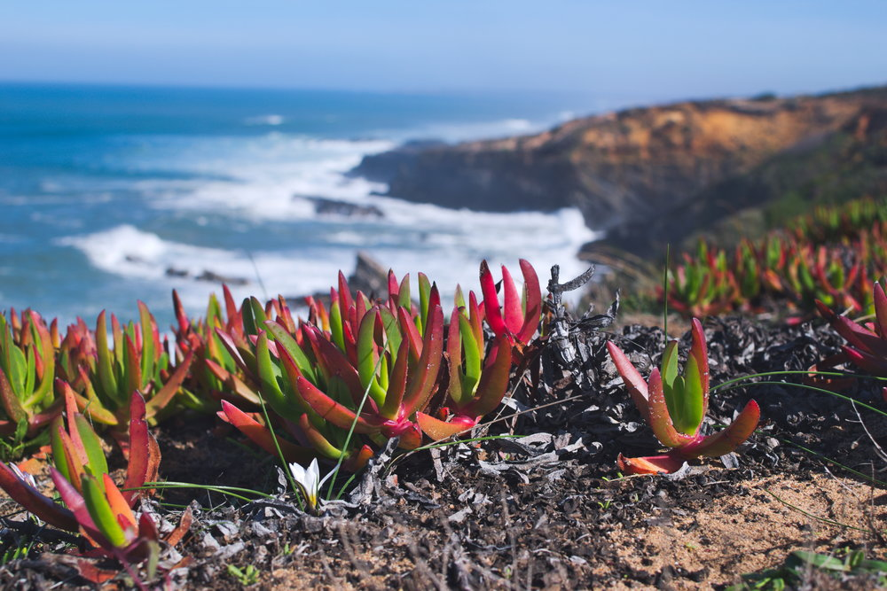 - If you love hiking but prefer to avoid camping, this trail is a dream come true. Read on to learn more about our 5 days of hiking along Portugal's scenic west coast.