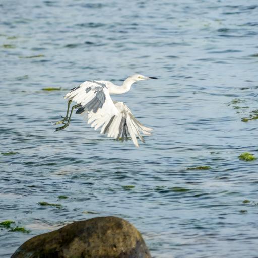 NIC LCI island getaway 201604 -00343.jpg