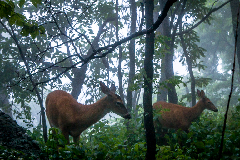 VA NVA scenery & deer -330.jpg