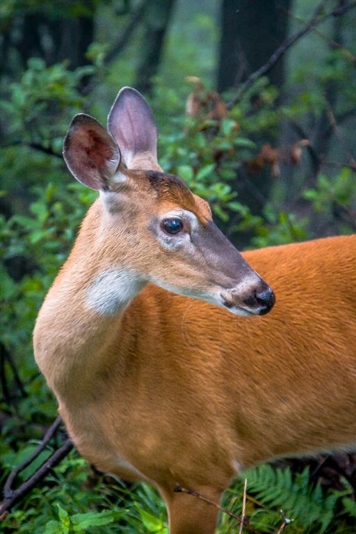 VA NVA scenery & deer -318.jpg