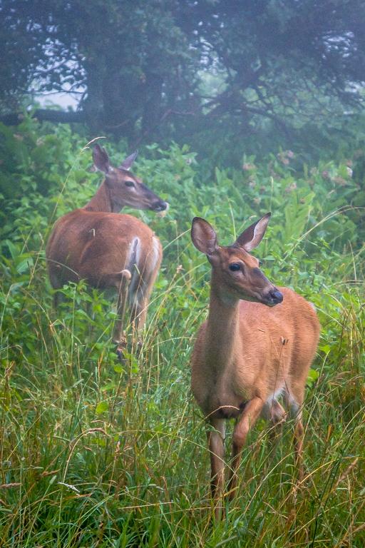 VA NVA scenery & deer -354.jpg
