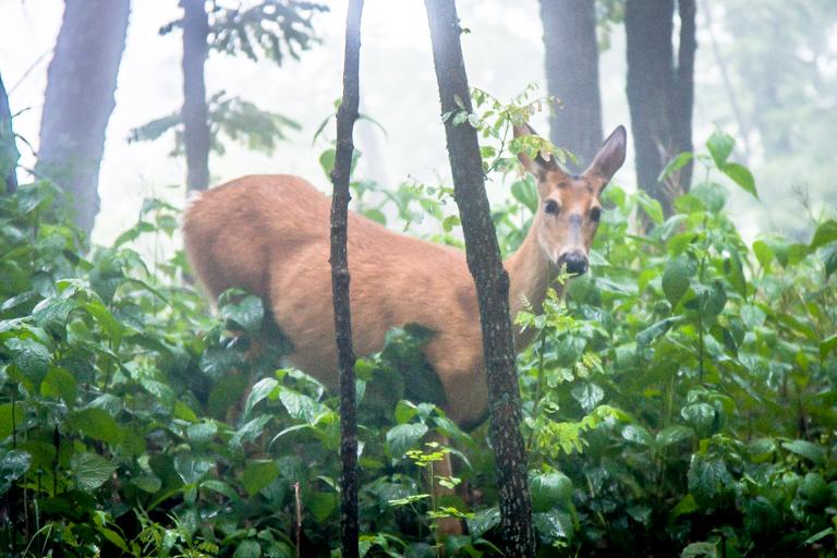 VA NVA scenery & deer -337.jpg