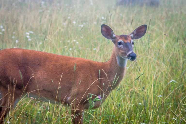 VA NVA scenery & deer -345.jpg