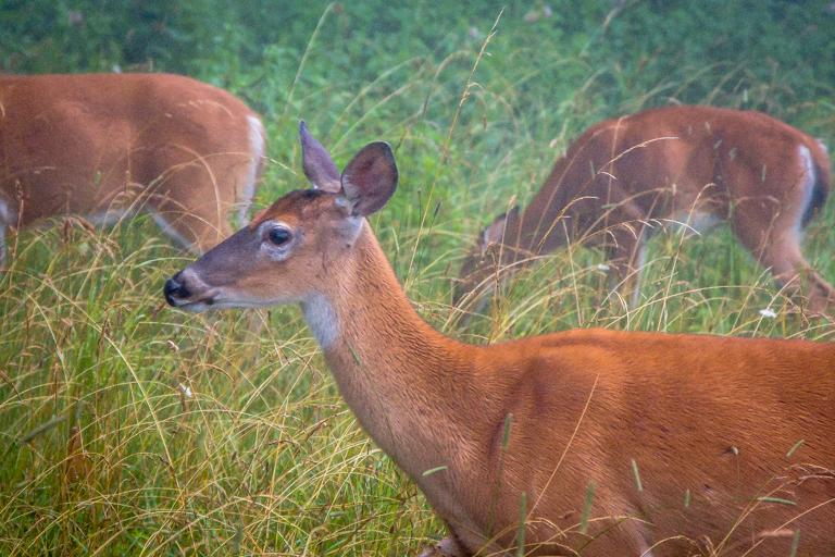 VA NVA scenery & deer -350.jpg