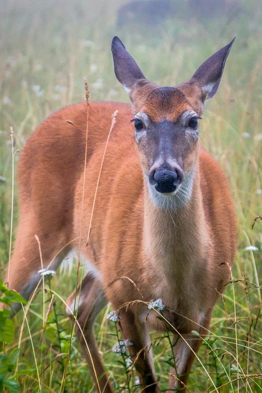 VA NVA scenery & deer -356.jpg