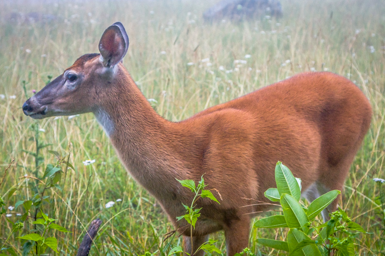 VA NVA scenery & deer -359.jpg