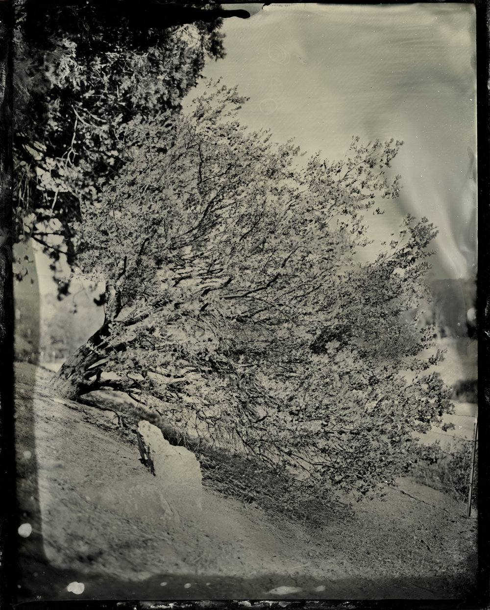 ROLLETT-wetplate-00004.jpg