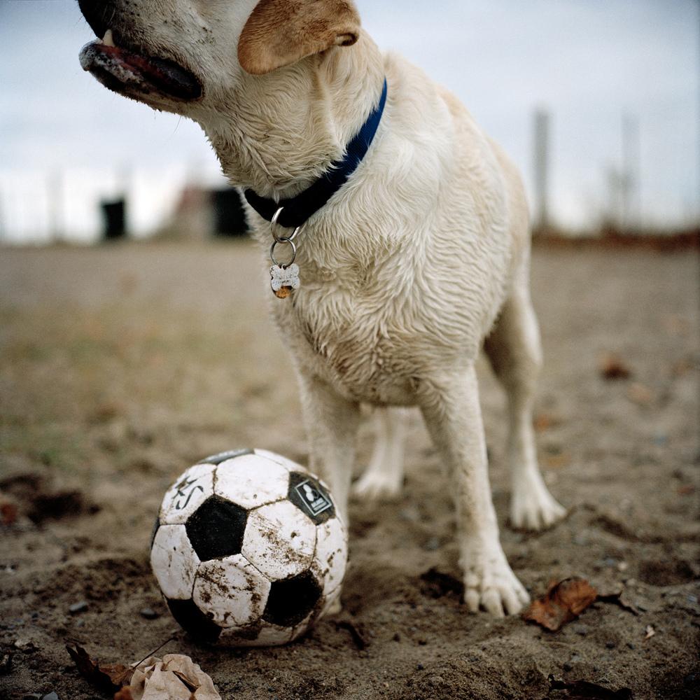 soccerdogprint.jpg