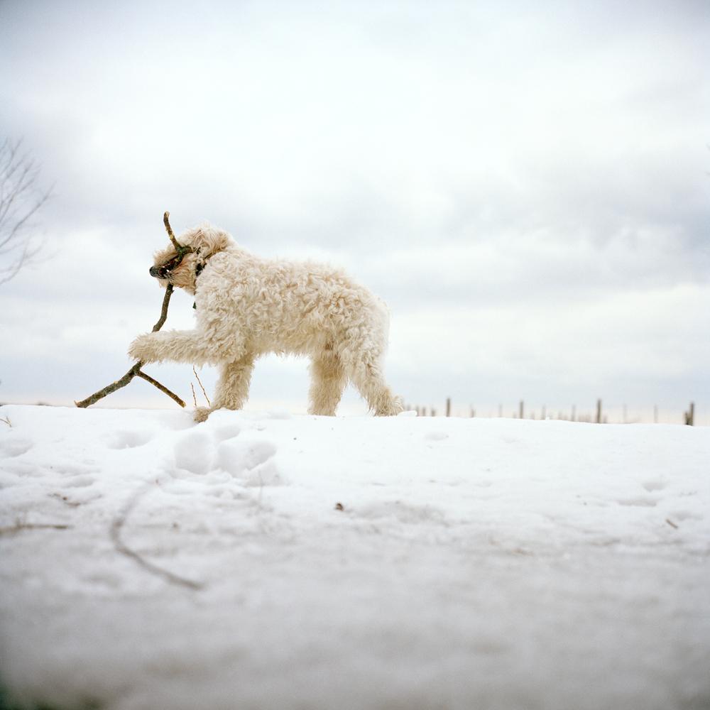 whitedog2.jpg