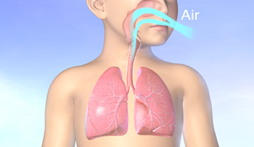 Asthma airways and lungs.   KO Studios ©2012, All rights retained