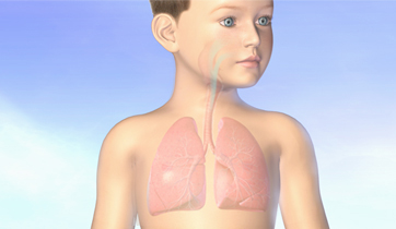 Asthma airways and lungs in children..   KO Studios ©2012, All rights retained