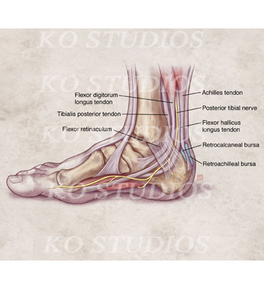 Lateral Foot Anatomy