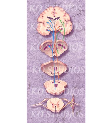 Parkinson's Pathway