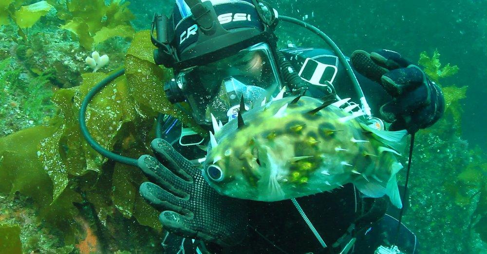 Blow Fish.jpg
