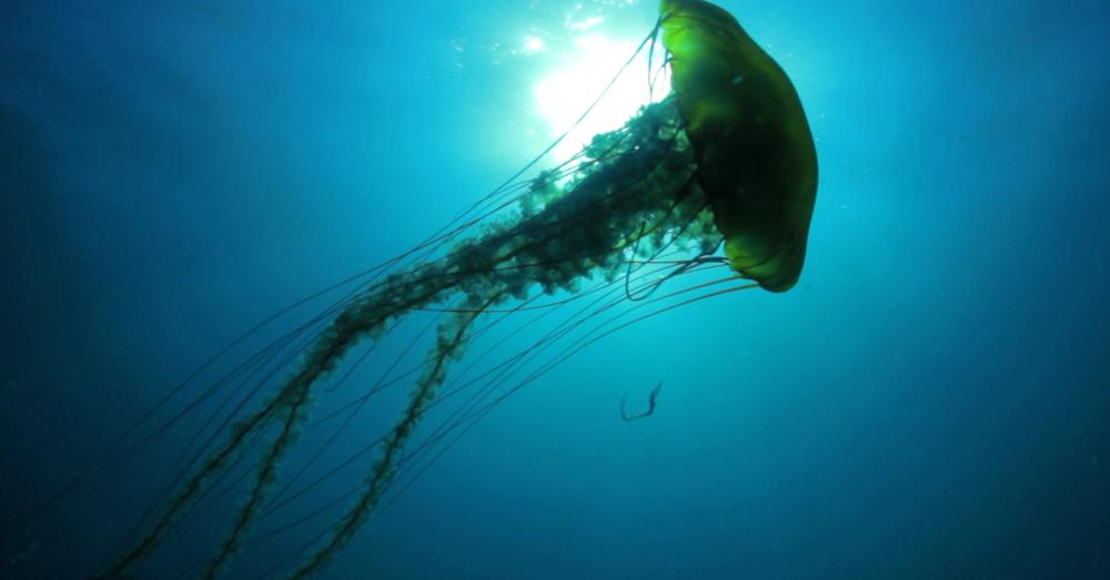 Ocean Mysteries 2012