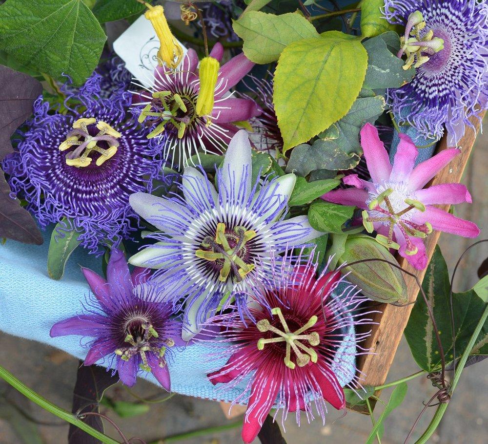 Passiflora_Starter_Kit_580x@2x.jpg