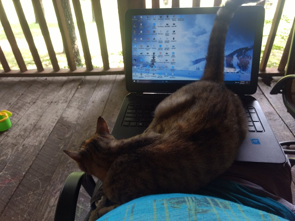 This cat (Linda) at our friends house in Arkansas didn't want me to write this blog.