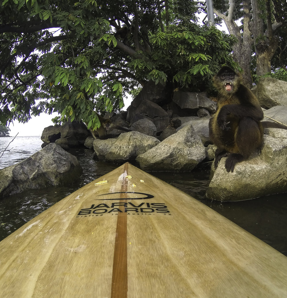 Jarvis Monkey-1.jpg