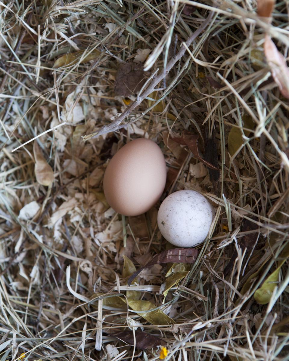 eggfooz-1.jpg