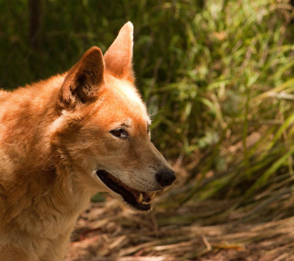 Healesville Sanctuary - Jan 2012 031.jpg