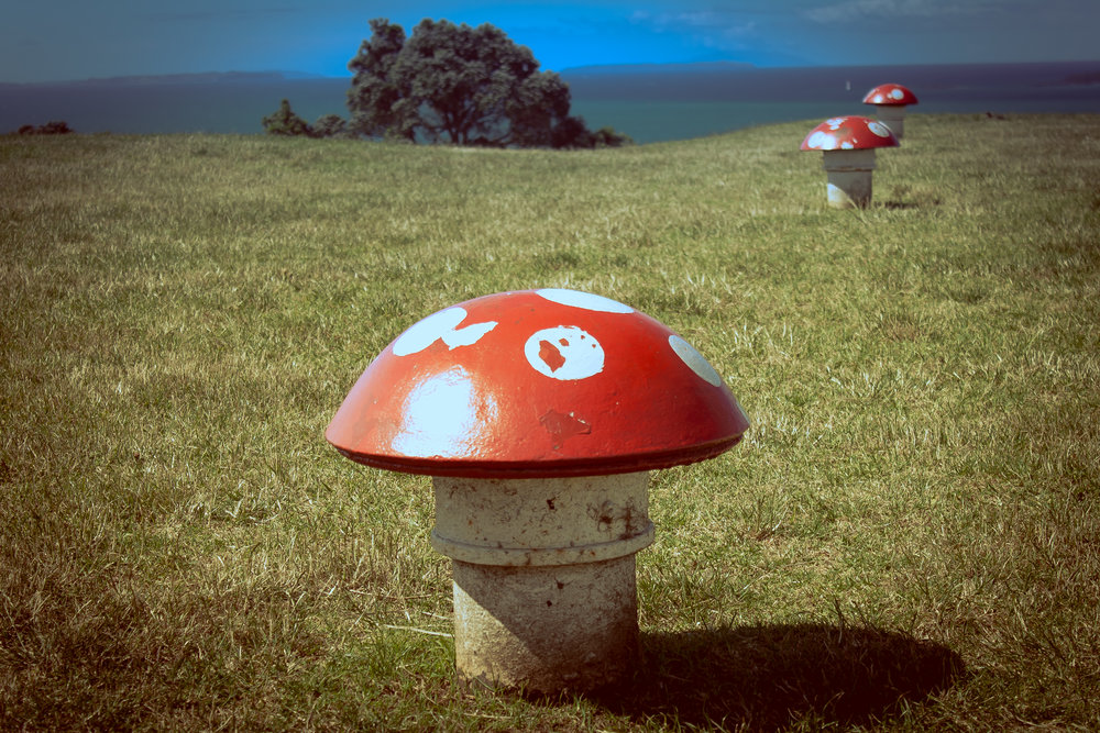 Mushroom vents.jpg
