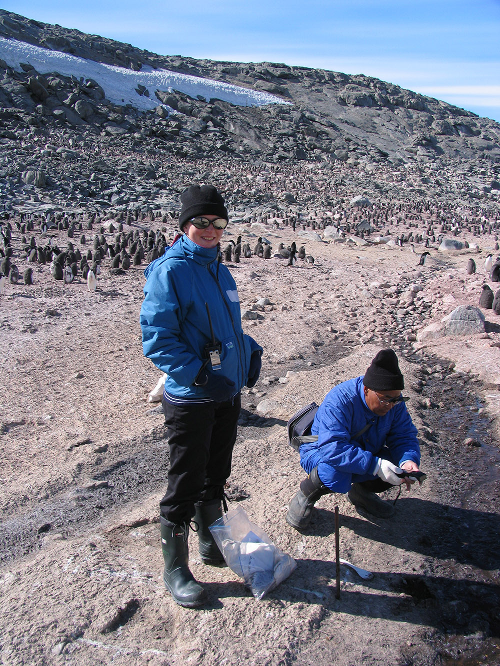 Coring, right next to a penguin rookery