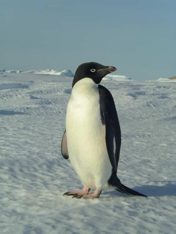 penguin03.jpg
