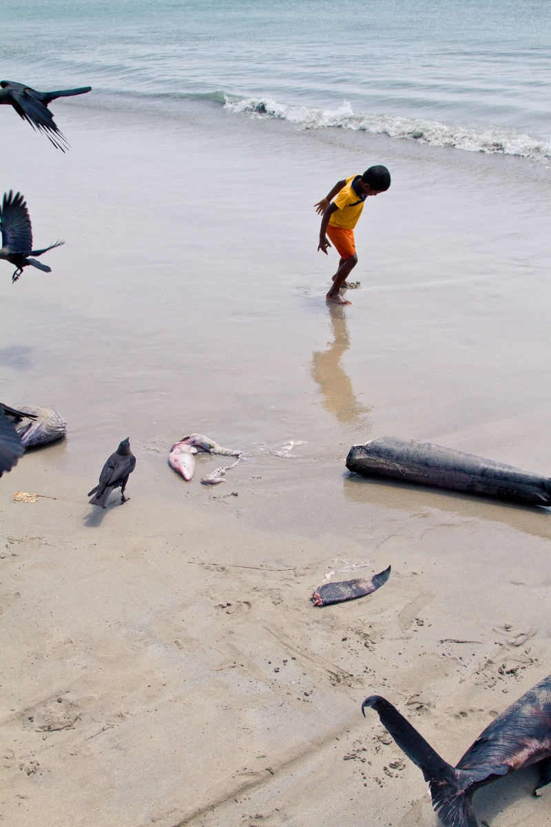 boy dancing before the ocean with dead fish and crows