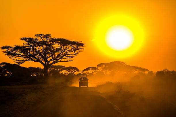 ifude-safaris.jpg