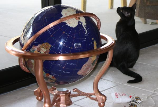 Global Cat.jpg