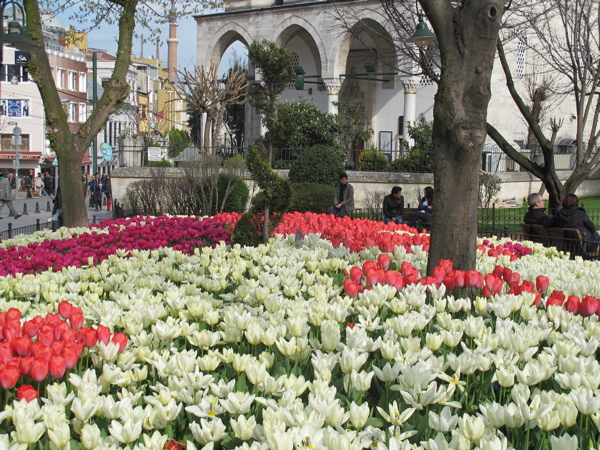 Turkish Tulips.jpg