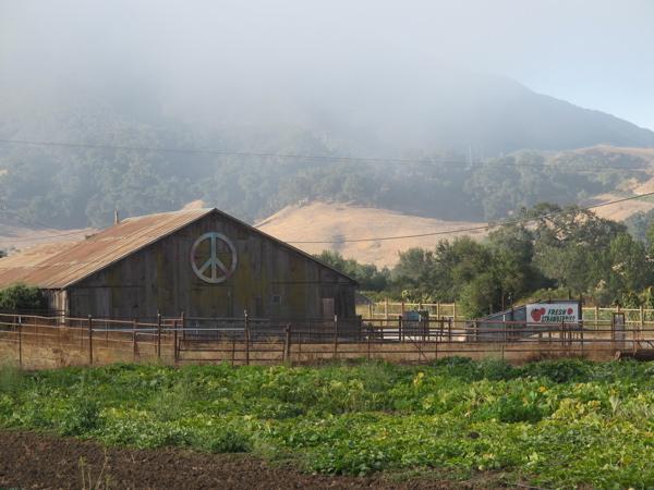 Classic Organic Barn.jpg
