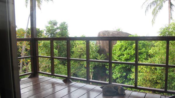 Thailandofficecat.jpg