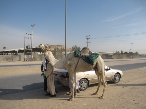 Camel and Camry.jpg